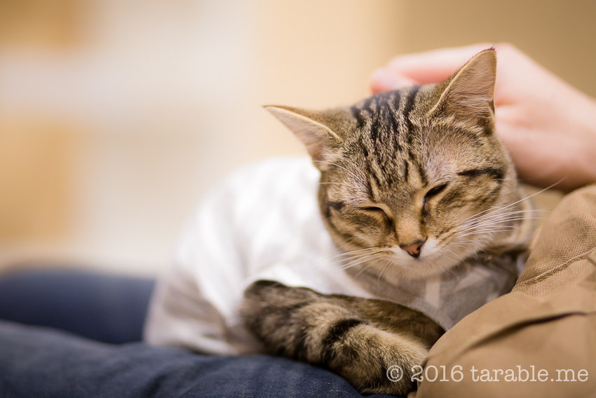 cat_cafe_purrth-13