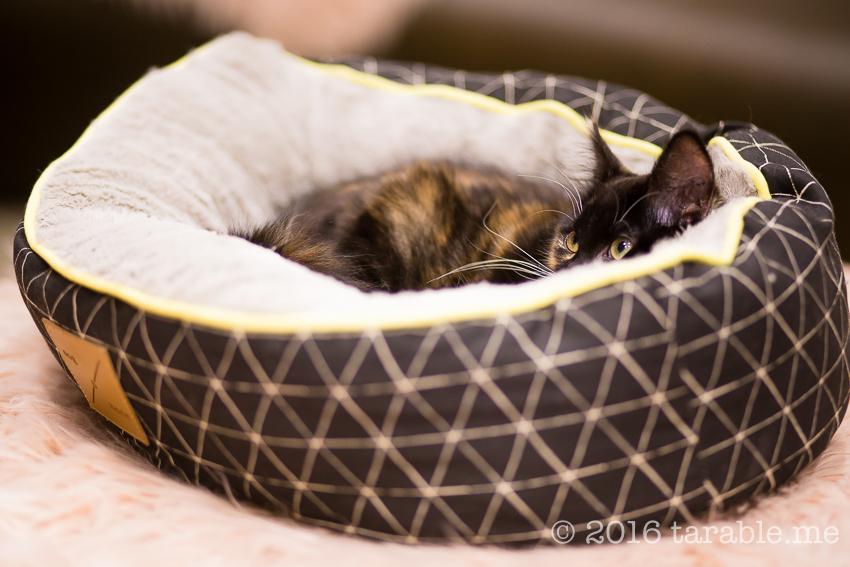 cat_cafe_purrth-14