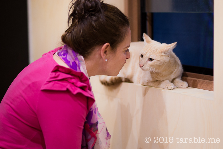 cat_cafe_purrth-15