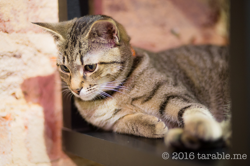 cat_cafe_purrth-16