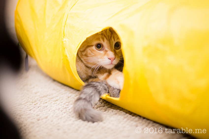 cat_cafe_purrth-17