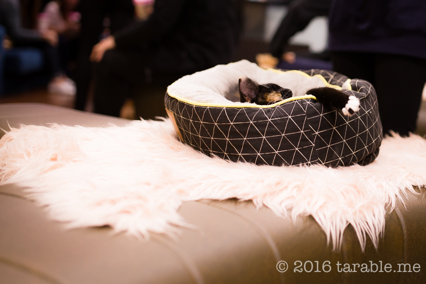 cat_cafe_purrth-5