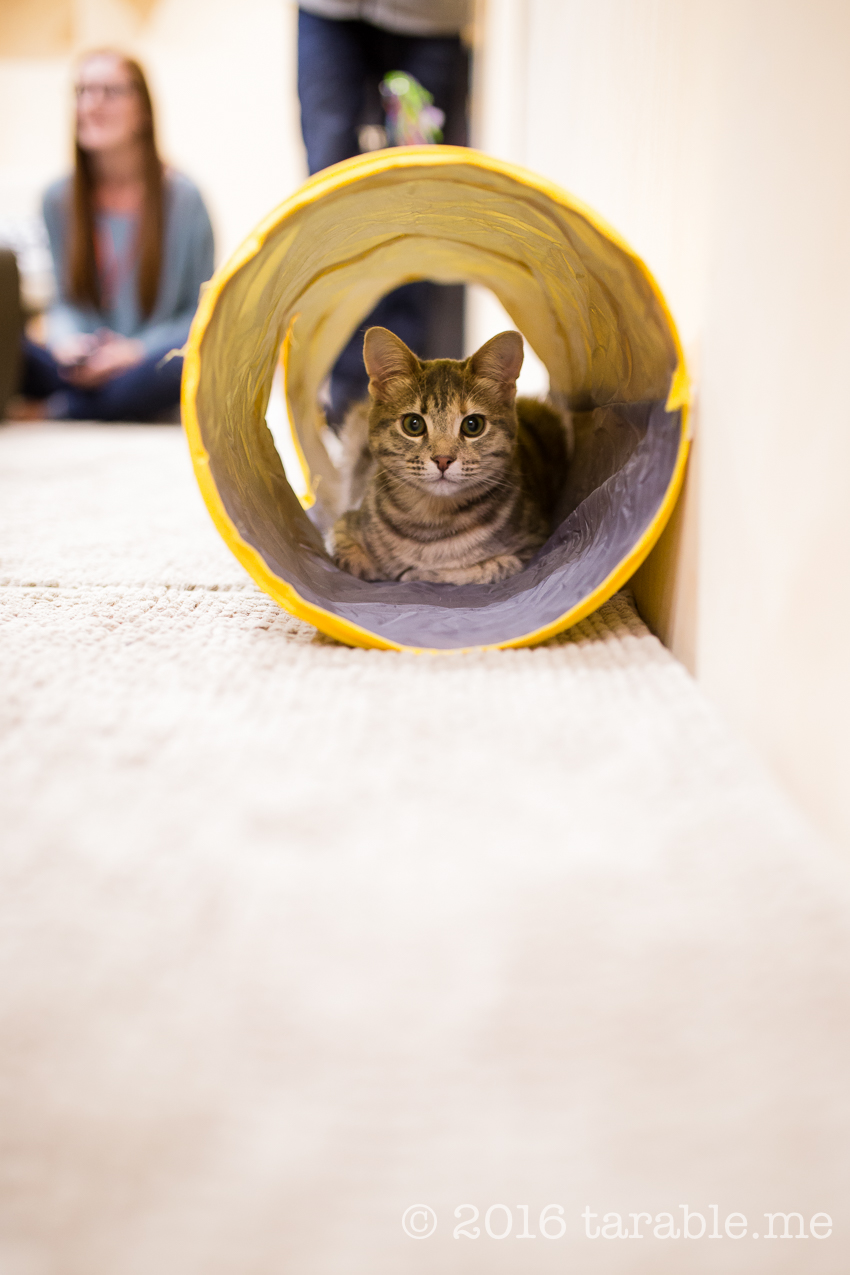 cat_cafe_purrth-8