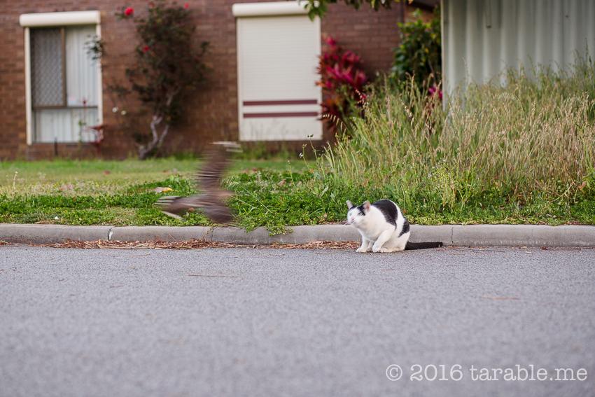 cat_and_bird-2